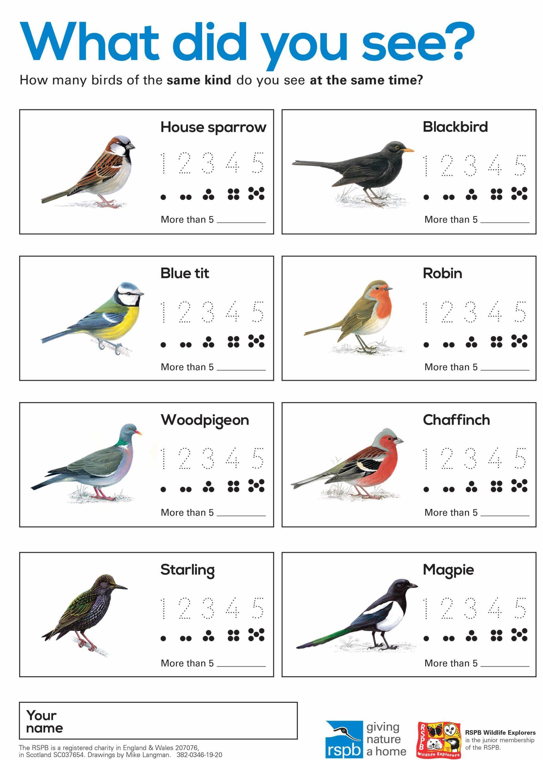 Birdwatching Chart Under 5s
